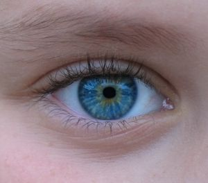 Blue-eyed humans have a single, common ancestor