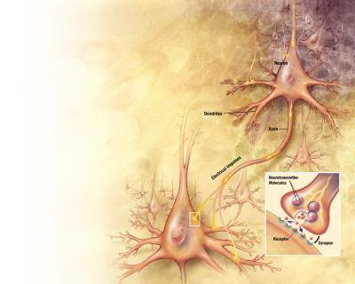 Dynamin's Role in Nerve Cell Function