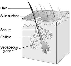 Mapping System For Skin Cells