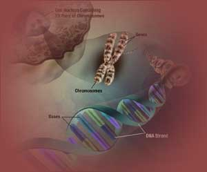 Novel Approach to Uncover Genetic Components of Aging