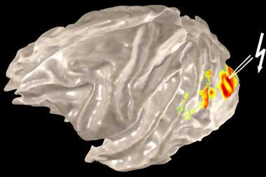 Revealing The Secrets Of The Brain