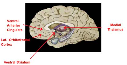Cerebral Cortex Suggested As Genesis Of Tremors